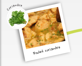 Poulet coriandre